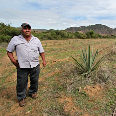 Making Mezcal: The Arrelanes Legacy